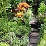 garden-72054_640