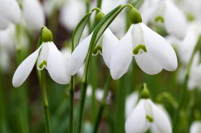Jarní kabátek pro vaši zahradu