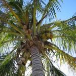 palm-16781_640