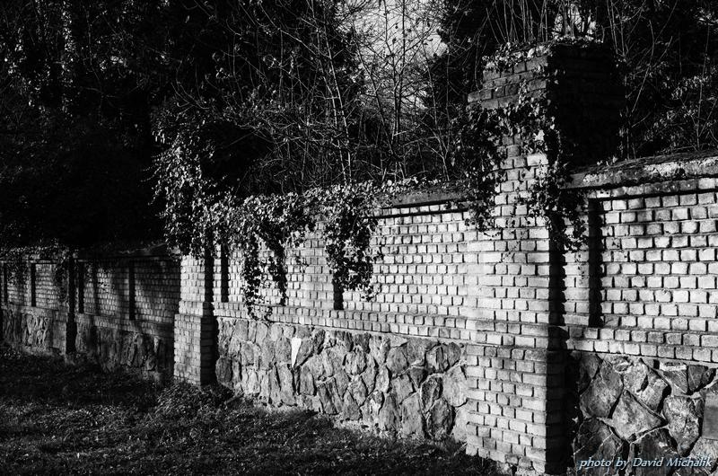 I zeď je porostlá břečťanem jako všechno kolem