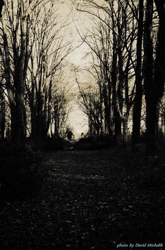 Cesta, která vede středem hřbitova je lemována stromy
