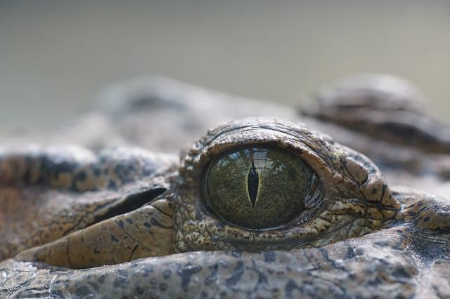 Poznejte pravěká zvířata zblízka. Vydejte se za krokodýly do Protivína